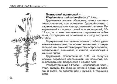 Образец страницы из книги Растения болот: Карманный определитель