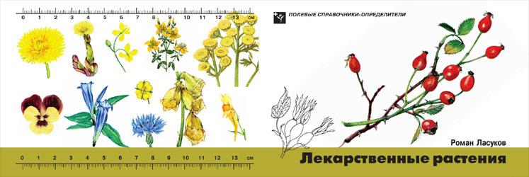 Обложка книги Лекарственные растения: Карманный определитель