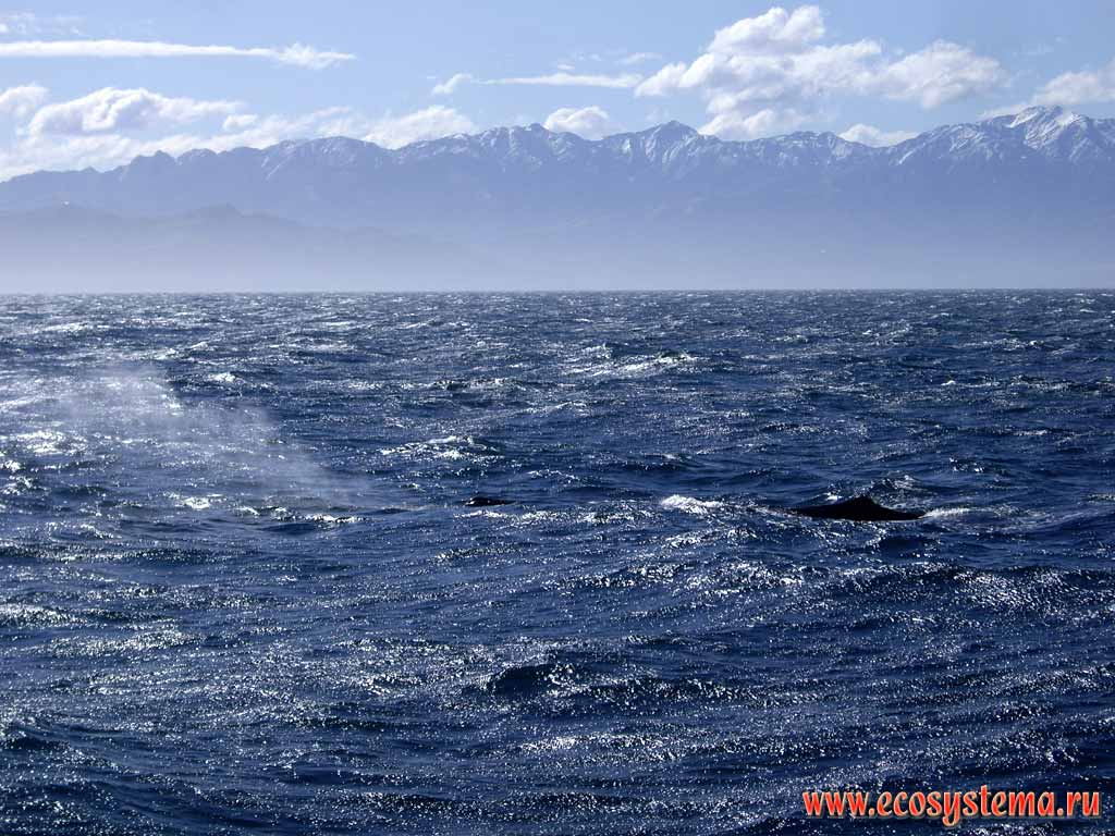 New Zealand (South Island) natural landscapes and nature ... Pacific Ocean Water