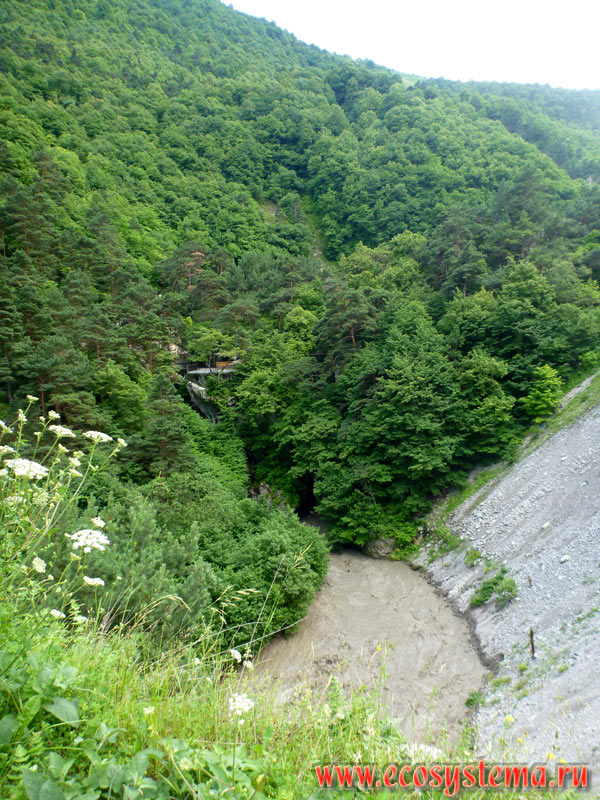 The bed of the mountain river Fiagdon with talus and deciduous forests in the foothills of the Greater Caucasus