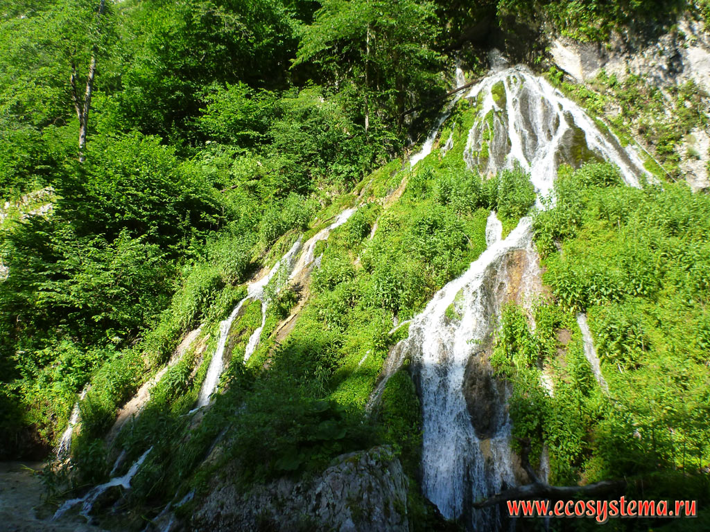 A small picturesque branched waterfall in the valley of the mountain river Fiagdon in the area of deciduous forests in the foothills of the Greater Caucasus