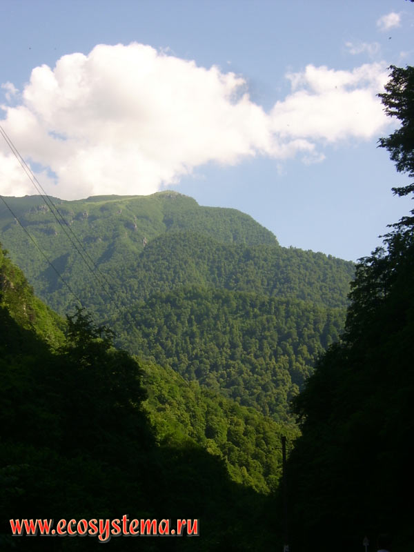 Deciduous forests on the slopes of medium-high mountains in the foothills of the Greater Caucasus, 40 km South-West of Vladikavkaz
