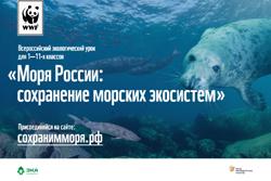 Готовый экологический урок проекта ЭкоКласс и WWF Моря России: сохранение морских экосистем - перейти на сайт
