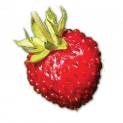 Компьютерный определитель ягод