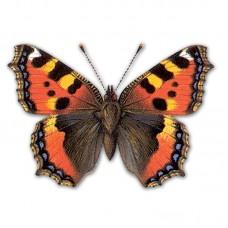 Компьютерный определитель дневных бабочек (на компакт-диске для PC)