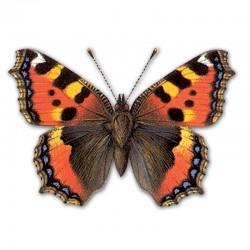 Компьютерный определитель бабочек