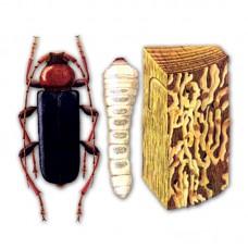 Компьютерный определитель насекомых-вредителей лесов России (на компакт-диске для PC)
