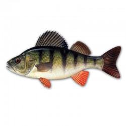 Компьютерный определитель рыб