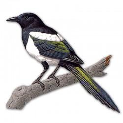 Компьютерный определитель птиц