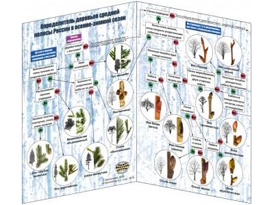 Наглядный определитель деревьев в зимний сезон