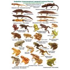 Амфибии и рептилии. Ламинированная определительная таблица