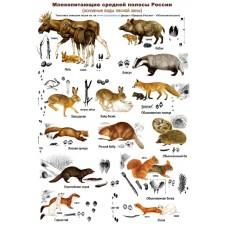 Млекопитающие и их следы